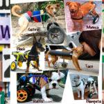 ruedas-perros